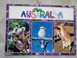 Australia   - Kangaroo  Koala  Kingfisher Kookaburra        D120856 - Non Classés