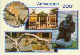 CP.  ANTWERPEN.  ZOO - Antwerpen