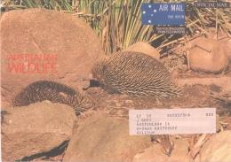 Fauna - Echidna Of MIERENEGEL Of Australia - Gibier