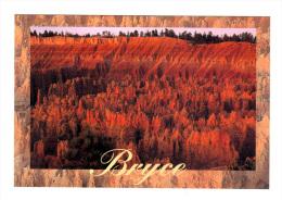 Etats Unis: Bryce Canyon National Park, Sunset Point, Silent City (14-3588) - Bryce Canyon