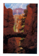 Etats Unis: Bryce Canyon National Park, Bridge Formation (14-3589) - Bryce Canyon