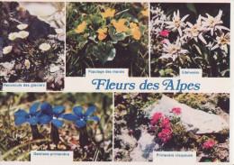 Fleurs Des Alpes- ** Bon état ** Ed.Jansol N°MF 1 (écrite & Circulée Le 22/08/79) - Agriculture