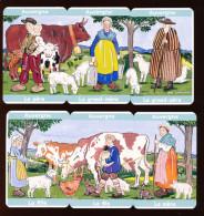 Humour Régionalisme Région Province Auvergne / Folklore Costumes Auvergnat / Lait Vache Cochon Agriculture  // IM 148/1 - Old Paper