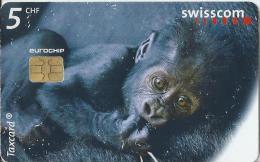 Telefoonkaart - Zwitserland. Swiss Telecom. Taxcard. CHF 5. Ybana Alias King Kong Junior. Zoo Zürich, - Daniel Boschung. - Zwitserland
