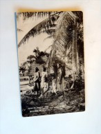 "Carte Postale Ancienne : SAIPAN ISLAND : Native Of ""Kanaka"" Under The Coconut Tree - Mariannes"
