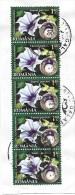 Rumänien:  Weisse Stechapfel - Datura Stramonium - Heilpflanzen