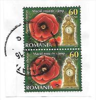 Rumänien:  Klatschmohn - Papaver Rhoeas - Heilpflanzen