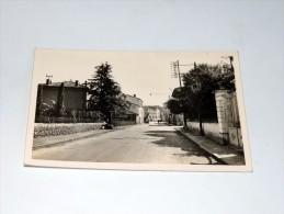 Carte Postale Ancienne : ROQUEBRUNE SUR ARGENS : Avenue Palayson - Roquebrune-sur-Argens