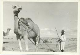 REAL PHOTO -Boy Plowing With A Camel, Boy Labour Avec Un Chameau, Old Photo - Groupes D'enfants & Familles