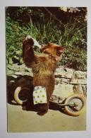 USSR . Durov Animal Theater - Circus. Bear Cub. 1971 - Cirque