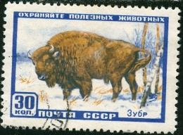 RUSSIA, URSS, FAUNA, ANIMALI, BISONTI, 1957, FRANCOBOLLO USATO, Scott 1920, YT 1907, Michel 1927 - Usati