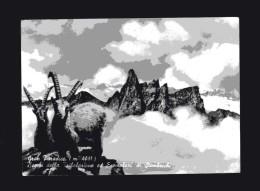 Valle D´Aosta - Cogne - Gran Paradiso - Becchi Della Tribolazione Ed Esemplari Di Stambecchi.   Viaggiata - Italia
