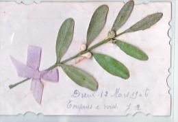 24089 Carte Postale Branche De Gui En Relief Et Collage -sans Editeur 1906