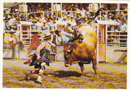 Brahma Bull Riding Calgary Exhibition and Stampede Canada Greate