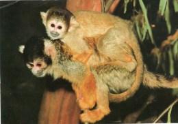 Postcard - Common Squirrel Monkeys At The Royal Melbourne Zoological Gardens. CS1514 - Monkeys