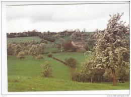 HERVE  -  Capitale Du Plateau - Vergers En Fleurs - Herve