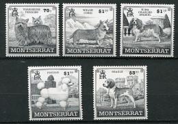 (cl 24 - P28) Montserrat ** N° 1011 à 1015 -  Chiens - Montserrat
