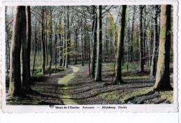 Cpa  : MONT DE L´ENCLUS : Automne / KLUISBERG  Herfst   ( 664) - Non Classés