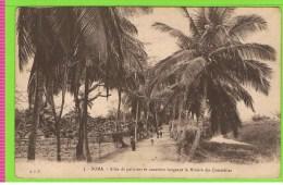 Boma- Allée De Palmiers Et Cocotiers Longeant La Rivère Des Crocodiles  3 - Belgian Congo - Other