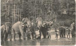 ELEPHANT ... 126 - Elephants