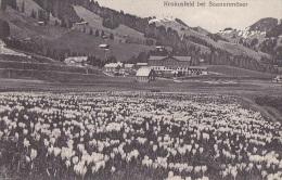 Suisse - Gstaad - Krokusfeld Bei Saanenmöser - Cachet Postal Gstaad 1934 - Thivars Eure Et Loir - BE Berne