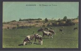ANNEMASSE - Un Pâturage Aux Voirous - Annemasse