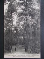 17 - ILE D´ OLÉRON - SAINT-TROJAN - Allée De La Forêt Conduisant à L´ Observatoire. - Ile D'Oléron