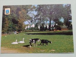 Zicht In Het Gemeentepark / Anno 19?? ( Zie Foto Details ) !! - Essen