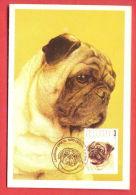 K37 / 1996 - STAMPS MAXI CARD ANIMALS Dog Chiens Hunde Cani Honden Perros - Calendar Calendrier Bulgaria Bulgarie - Calendarios