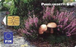 FINLAND  6E MUSHROOMS FOOD  E.D.  12.2004 CHIP READ DESCRIPTION !!