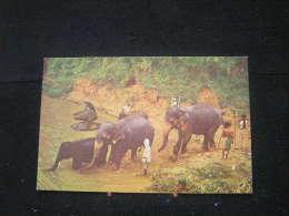 Eb-n°121 / Elephants Bathing Near Kandy.  Sri Lanka- Ceylon   .- - Lions