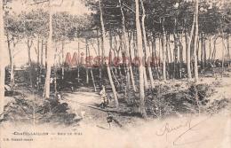 17 -  Chatellaillon  -   Bois De Pins    2 Scans - Châtelaillon-Plage