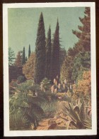 Stationery Mail Used 1955 Cover USSR RUSSIA Sochi Park Arboretum Flora Tree - 1923-1991 USSR