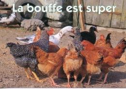 La Bouffe Est Super - Basse Cour Poules Canards - Les Humoristiques (animaux Faune) éd Debaisieux - Humour