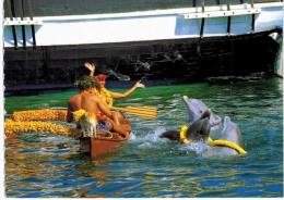 Thème - Animaux - Dauphin - Sea Life Park  - Oahu  - Hawaï - Delfini
