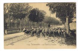 AURAGNE  LA RENTREE A L ETABLE - Francia