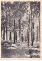Maison De Cure Et De Repos Charles De Hemptinne à Jauche (Brabant)-Parc Et Promenade - Orp-Jauche
