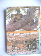 Africa Namibië Namibia Animals - Namibië