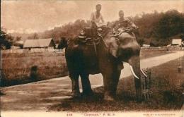 Postcard RA001699 - Elephant - Elephants