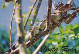 Ph-CPM Costa Rica (Costa Rica) Iguana, 12,00 X 17,00 Cm - Costa Rica