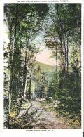 The White Mountain National Forest, White Mountains, New Hampshire
