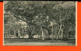 Indonésie - Ficus Boomen Met Luchtwortels In Het Park Van Den Gouverneur Generaal - Indonesia
