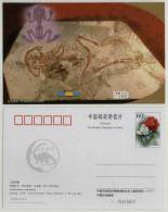 Callobatrachus Sanyanensis Frog Fossil,Live With Dinosaur,Anurans In Early Cretaceous Period,CN 03 IVPP Advert PSC - Fossils