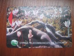 Cyprus. Flowers. Akamas Forest. Magnetic Card. - Bloemen