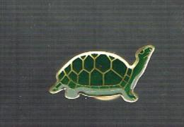 Tortue - Animaux
