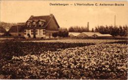 Destelbergen 1 CP Horticulture Aelterman Bracke   Dendermondsesteenweg - Destelbergen