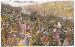 CARD PUBBLICITA' PARFUMERIE BRUNO COURT GRASSE (06) CUEILLETTE DES FLEURS D'ORANGER -FP-N-2 -0082-22281 - Perfume Cards