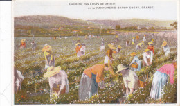 CARD PUBBLICITA' PARFUMERIE BRUNO COURT GRASSE (06) CUEILLETTE DES FLEURS DE JASMIN -FP-N-2 -0082-22283 - Perfume Cards