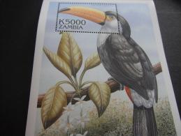 Zambia-Birds - Other