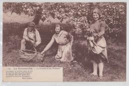La Normandie - Cueillette Des Pommes - Ermice éditeur à Vire - TTB - France